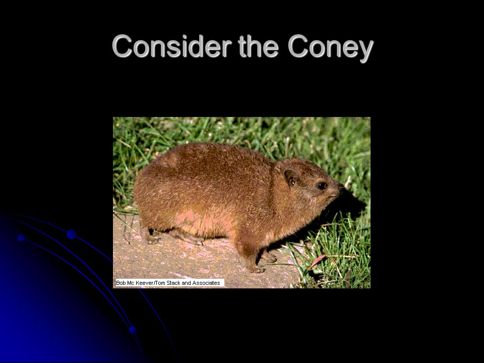 Consider the Coney