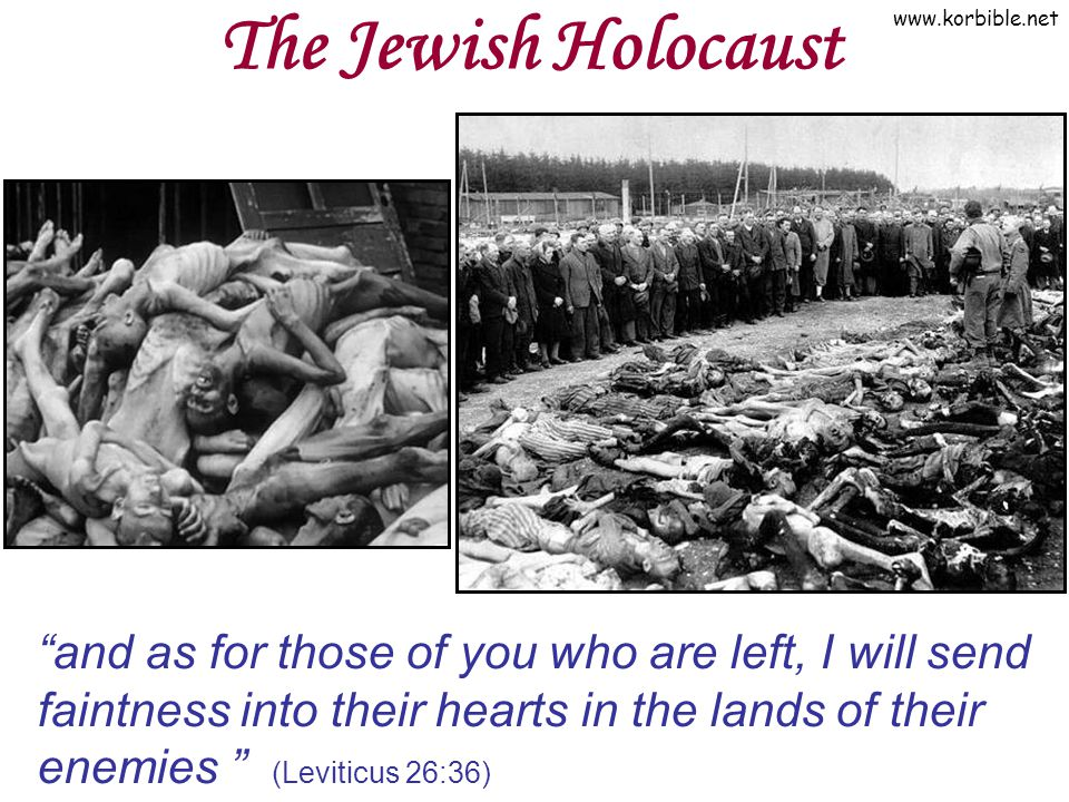 www.korbible.net The Jewish Holocaust and as for those of you who are left, I will send faintness into their hearts in the lands of their enemies (Lev