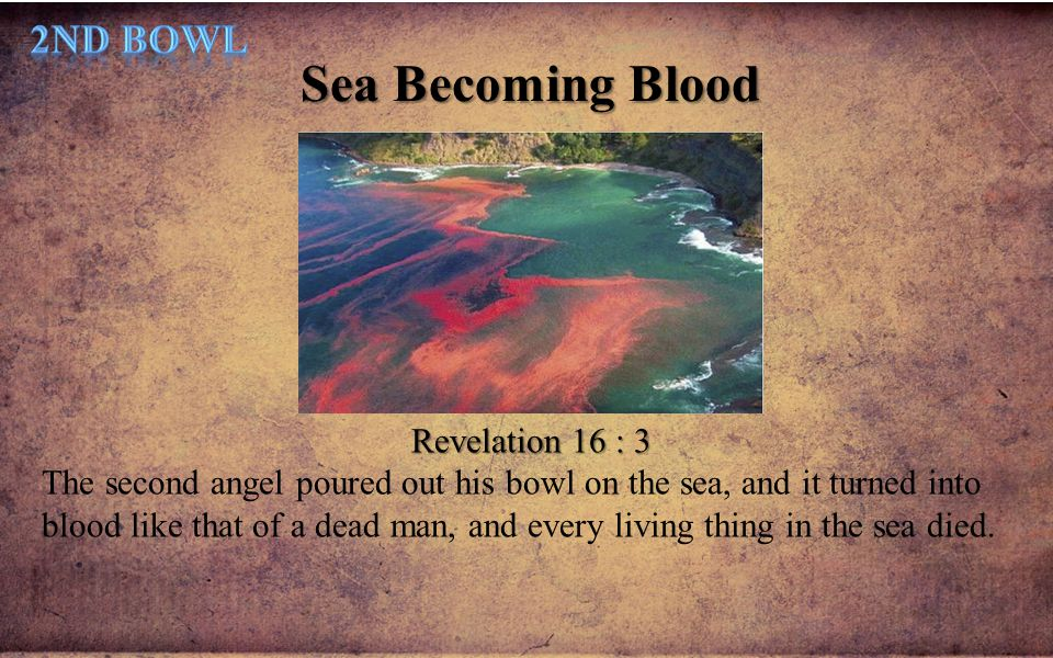 Sea Becoming Blood Revelation 16 : 3 The second angel poured out his bowl on the sea, and it turned into blood like that of a dead man, and every livi