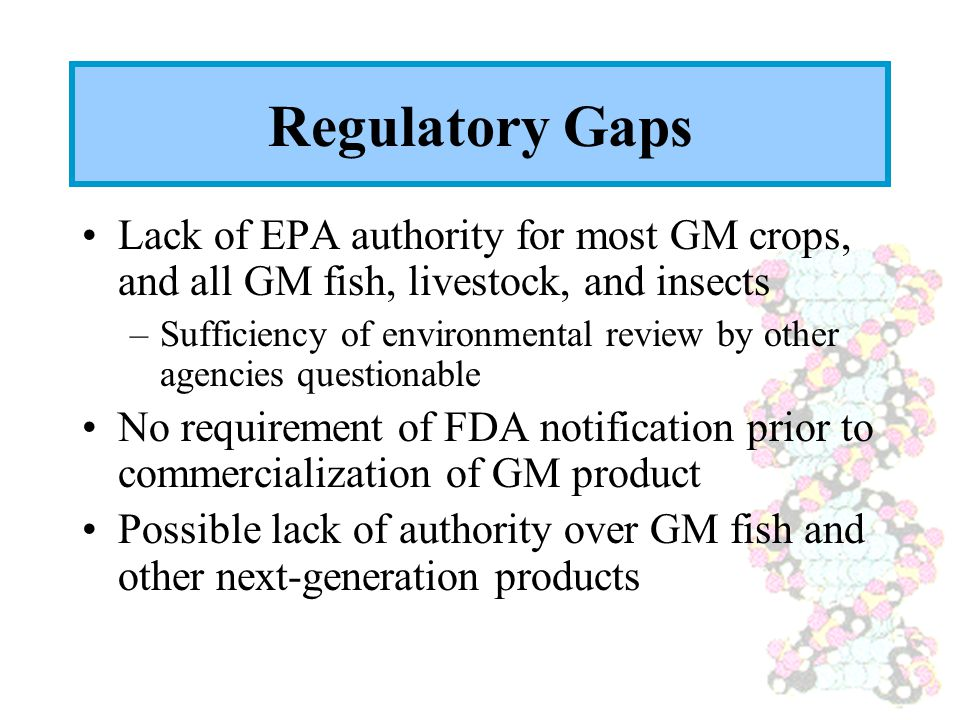 Regulatory Gaps Lack of EPA authority for most GM crops, and all GM fish, livestock, and insects –Sufficiency of environmental review by other agencies questionable No requirement of FDA notification prior to commercialization of GM product Possible lack of authority over GM fish and other next-generation products