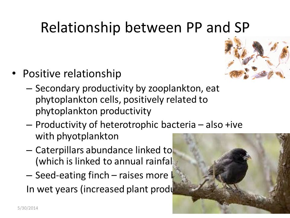 Relationship between PP and SP Positive relationship – Secondary productivity by zooplankton, eat phytoplankton cells, positively related to phytoplan