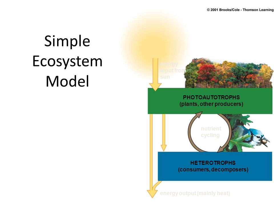 Simple Ecosystem Model energy input from sun nutrient cycling PHOTOAUTOTROPHS (plants, other producers) HETEROTROPHS (consumers, decomposers) energy o