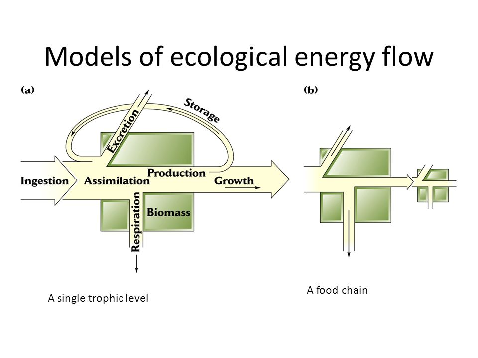 Models of ecological energy flow A single trophic level A food chain