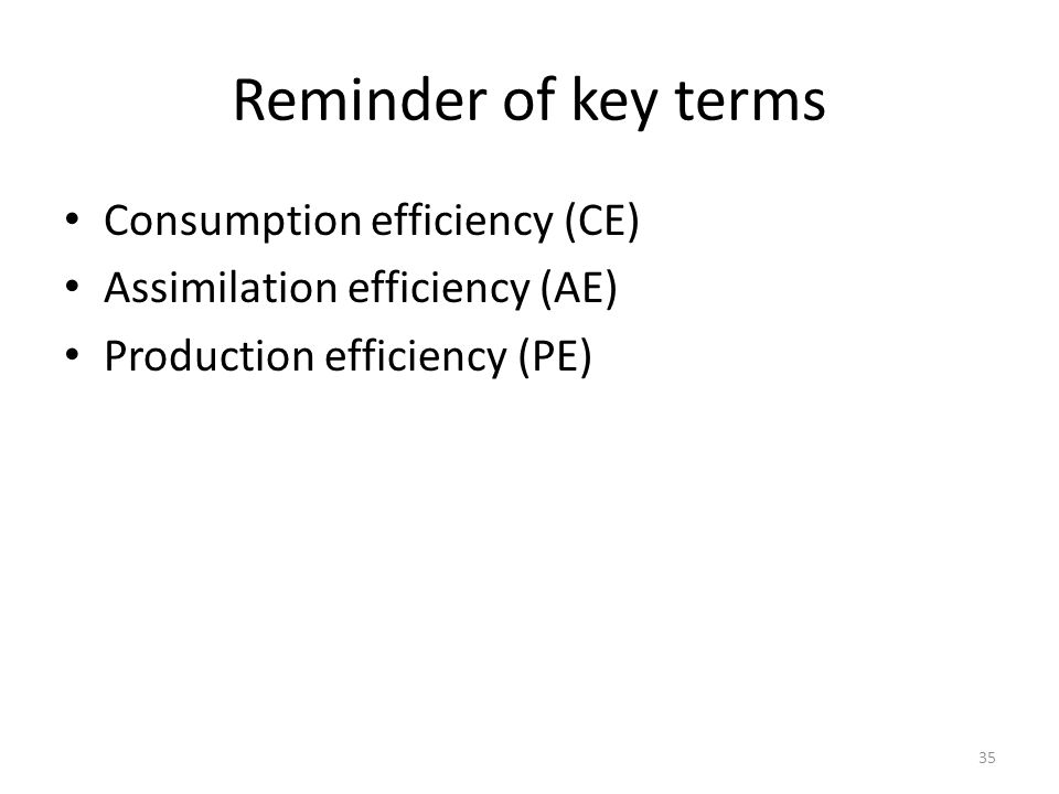 Reminder of key terms Consumption efficiency (CE) Assimilation efficiency (AE) Production efficiency (PE) 35