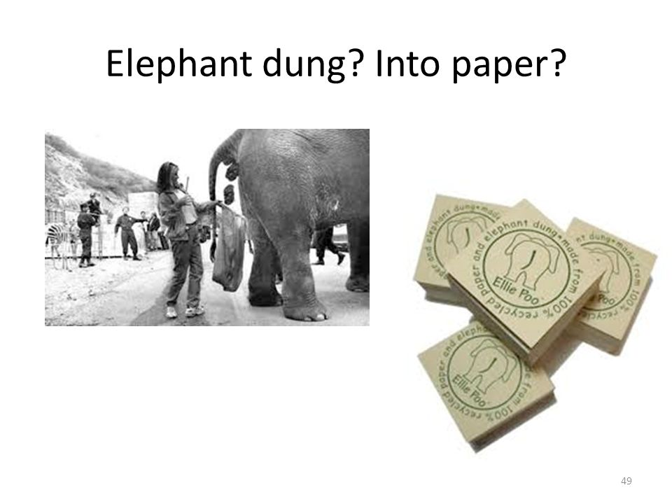 Elephant dung? Into paper? 49