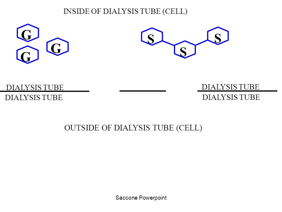 Saccone Powerpoint G G G S S S INSIDE OF DIALYSIS TUBE (CELL) OUTSIDE OF DIALYSIS TUBE (CELL) DIALYSIS TUBE