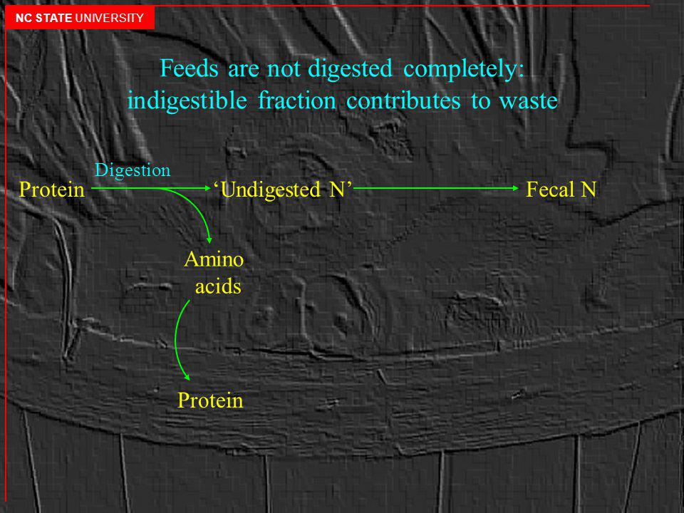 Feeds are not digested completely: indigestible fraction contributes to waste Protein Undigested N Fecal N Amino acids Digestion Protein NC STATE UNIVERSITY