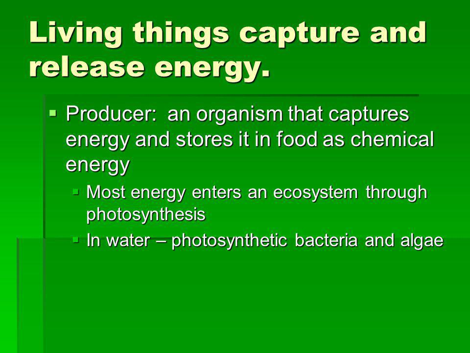 Living things capture and release energy. Producer: an organism that captures energy and stores it in food as chemical energy Producer: an organism th