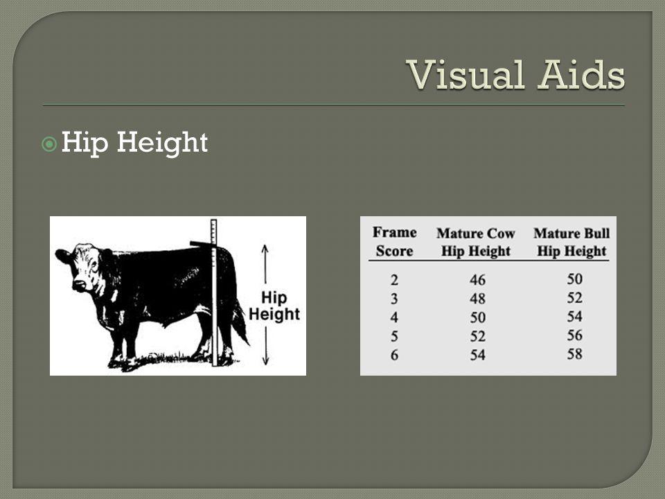 Hip Height