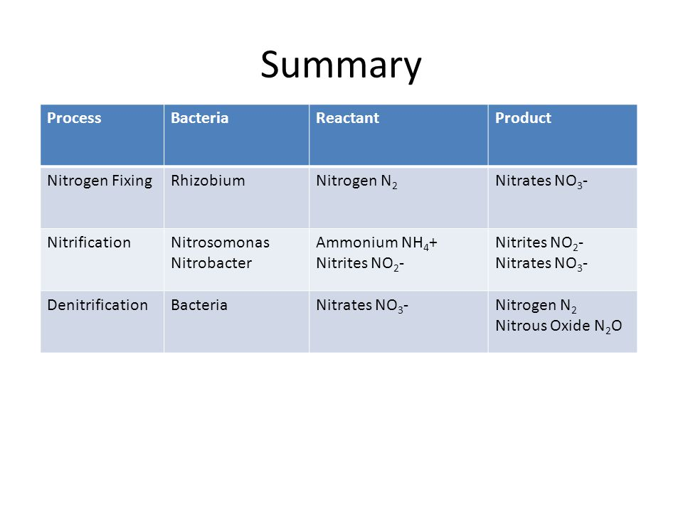 Summary ProcessBacteriaReactantProduct Nitrogen FixingRhizobiumNitrogen N 2 Nitrates NO 3 - NitrificationNitrosomonas Nitrobacter Ammonium NH 4 + Nitrites NO 2 - Nitrates NO 3 - DenitrificationBacteriaNitrates NO 3 -Nitrogen N 2 Nitrous Oxide N 2 O