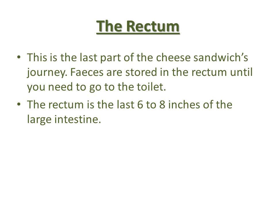 The Rectum This is the last part of the cheese sandwichs journey. Faeces are stored in the rectum until you need to go to the toilet. The rectum is th