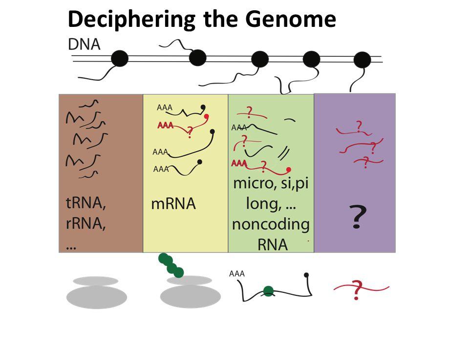 Part 2: Gene Fusions