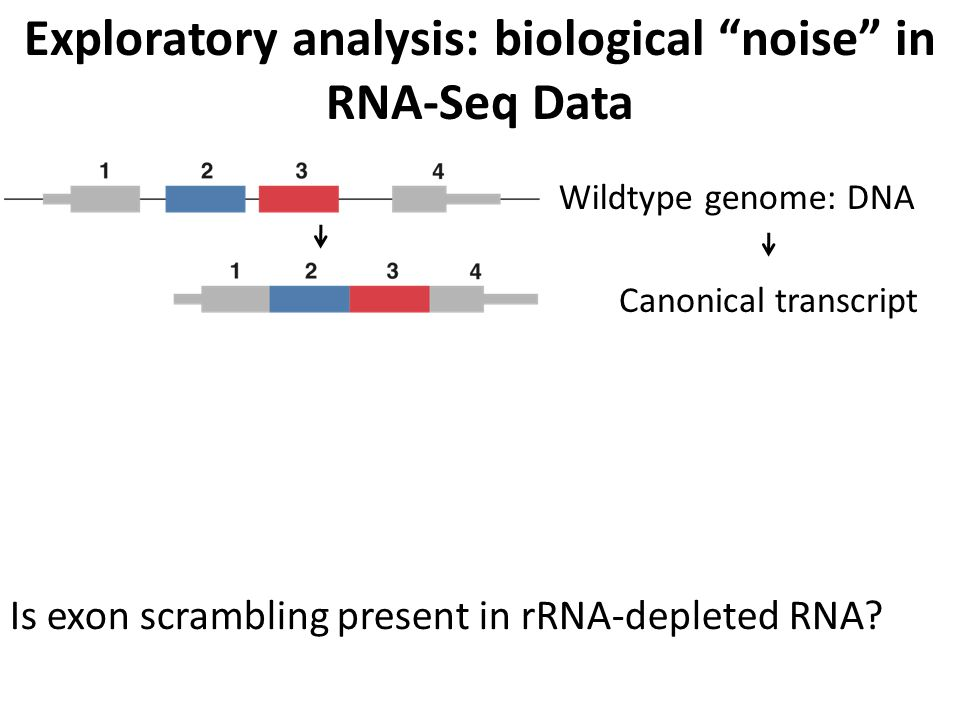 Is exon scrambling present in rRNA-depleted RNA? Exploratory analysis: biological noise in RNA-Seq Data Wildtype genome: DNA Canonical transcript Scra