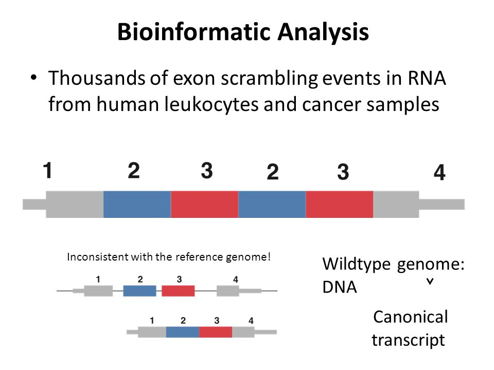 Bioinformatic Analysis Thousands of exon scrambling events in RNA from human leukocytes and cancer samples Wildtype genome: DNA Canonical transcript I
