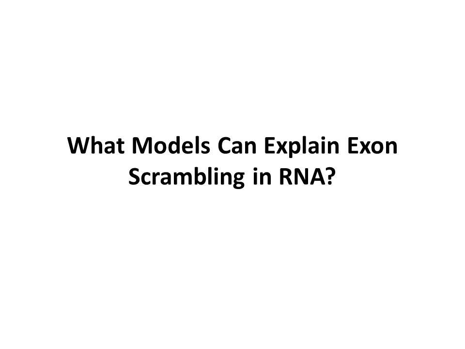 What Models Can Explain Exon Scrambling in RNA?