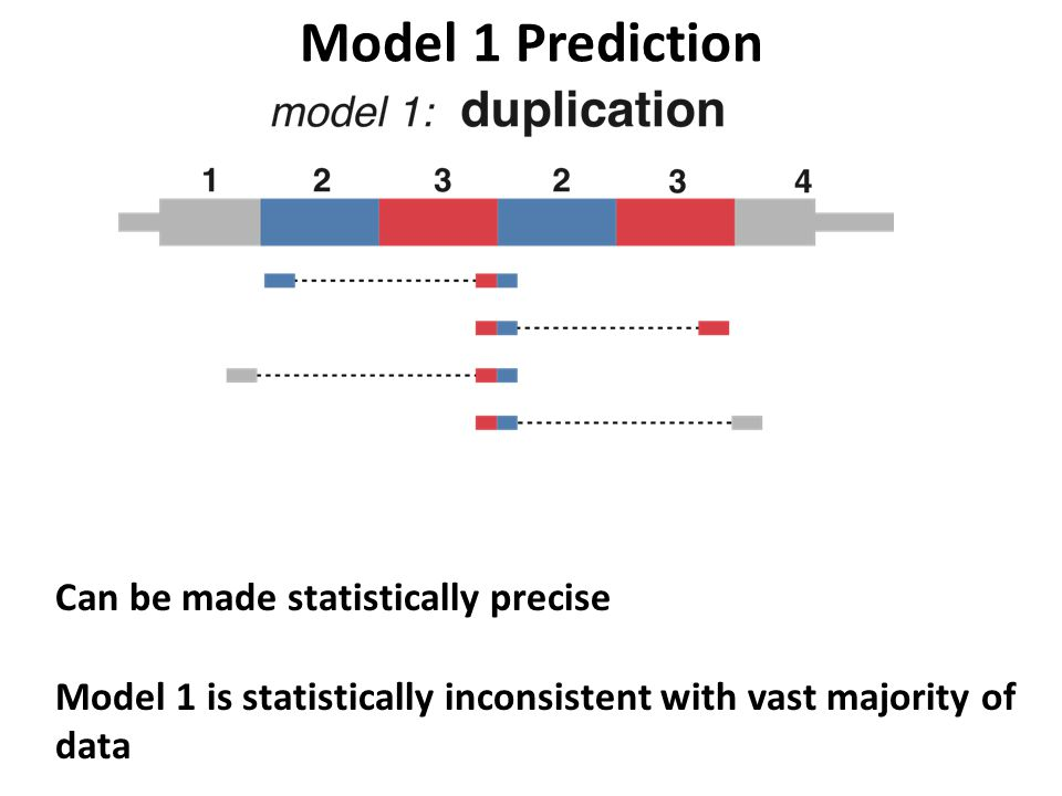 Model 1 Prediction Can be made statistically precise Model 1 is statistically inconsistent with vast majority of data A subset of genes have evidence