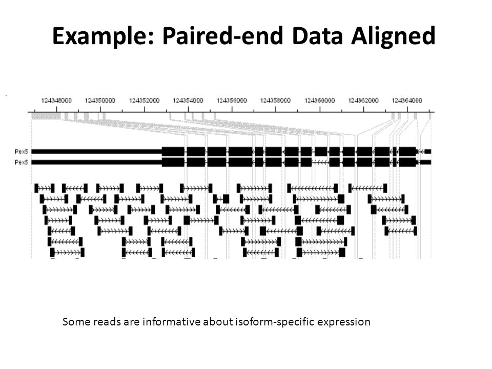 Paired-end RNA-Seq for RNA Isoform Specific Gene Expression Since the size distribution of library molecules is known, inferred insert lengths can be used to increase statistical power and inference Rnpep Goal: estimate the expression of each isoform.