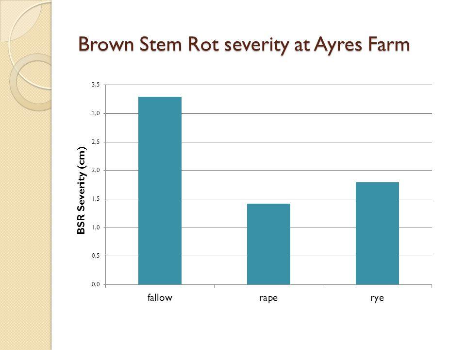 Brown Stem Rot severity at Ayres Farm