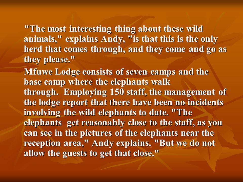 The most interesting thing about these wild animals, explains Andy, is that this is the only herd that comes through, and they come and go as they please. The most interesting thing about these wild animals, explains Andy, is that this is the only herd that comes through, and they come and go as they please. Mfuwe Lodge consists of seven camps and the base camp where the elephants walk through.