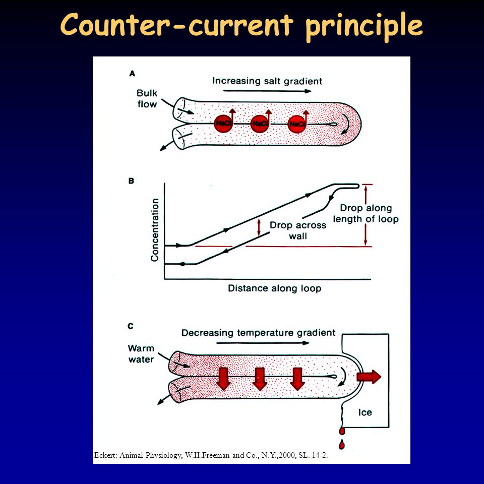 Counter-current principle Eckert: Animal Physiology, W.H.Freeman and Co., N.Y.,2000, SL. 14-2.
