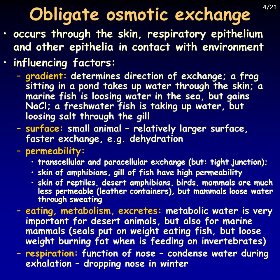 Obligate osmotic exchange occurs through the skin, respiratory epithelium and other epithelia in contact with environment influencing factors: –gradient: determines direction of exchange; a frog sitting in a pond takes up water through the skin; a marine fish is loosing water in the sea, but gains NaCl; a freshwater fish is taking up water, but loosing salt through the gill –surface: small animal – relatively larger surface, faster exchange, e.g.