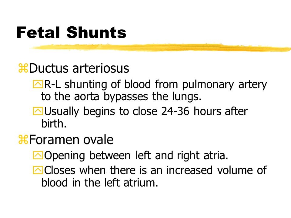 Fetal Shunts zDuctus arteriosus yR-L shunting of blood from pulmonary artery to the aorta bypasses the lungs. yUsually begins to close 24-36 hours aft