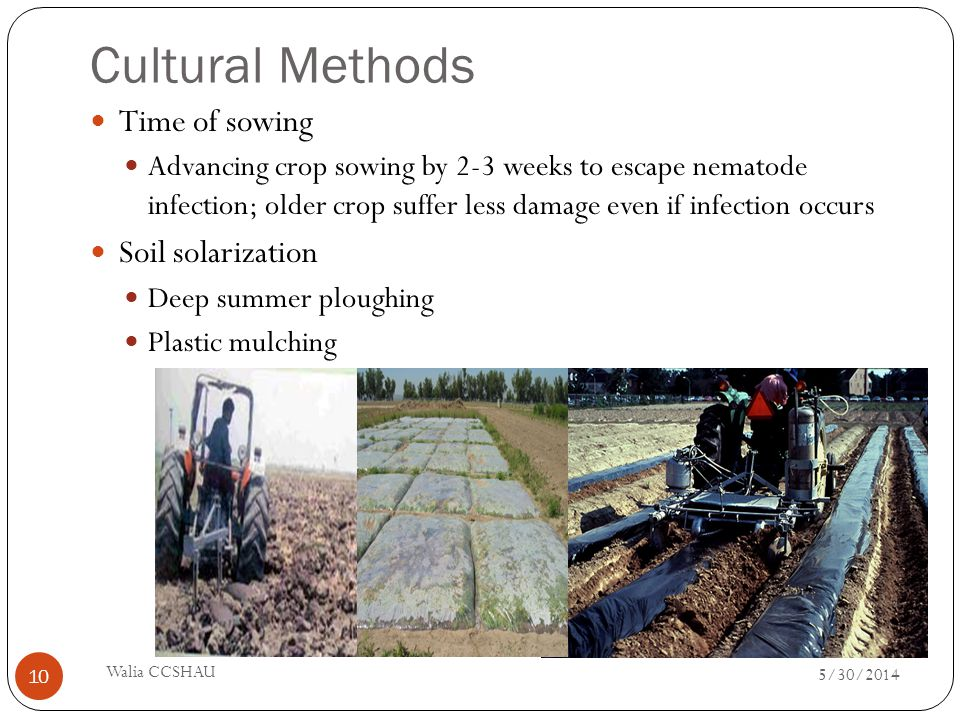 Cultural Methods Time of sowing Advancing crop sowing by 2-3 weeks to escape nematode infection; older crop suffer less damage even if infection occur