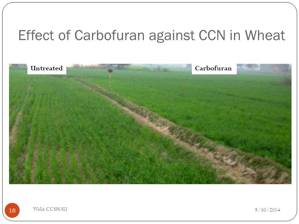 Effect of Carbofuran against CCN in Wheat UntreatedCarbofuran 5/30/2014 Walia CCSHAU 18