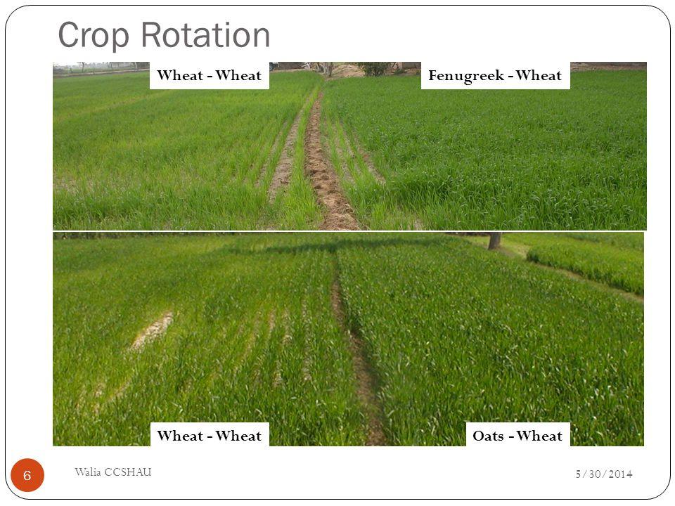 Crop Rotation Wheat - WheatOats - Wheat Wheat - WheatFenugreek - Wheat 5/30/2014 Walia CCSHAU 6
