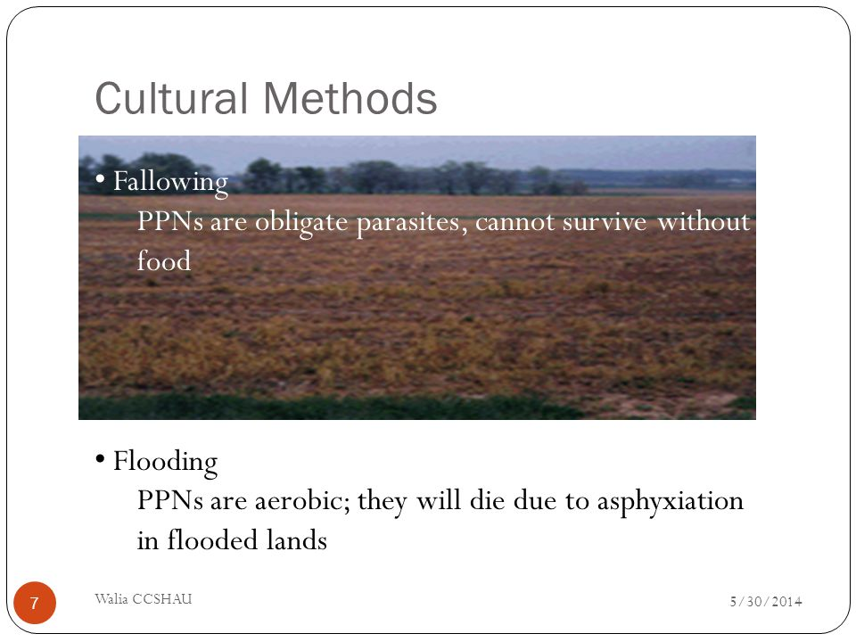 2.FALLOWING KEEPING THE FIELD BLANK Fallowing PPNs are obligate parasites, cannot survive without food Flooding PPNs are aerobic; they will die due to