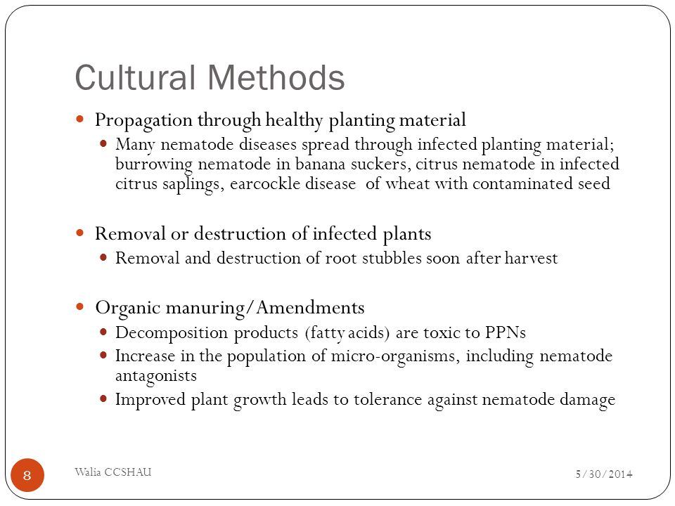 Cultural Methods Trap crops Nematodes penetrate but fail to develop inside some crops like Crotalaria; can be used as green manure after a few days Antagonistic crops Root exudates of certain crops contain nematoxic compounds Onion Garlic Tagetes ( -terthienyl) Asparagus (asparagusic acid) Can be used as interculture 5/30/2014 Walia CCSHAU 9