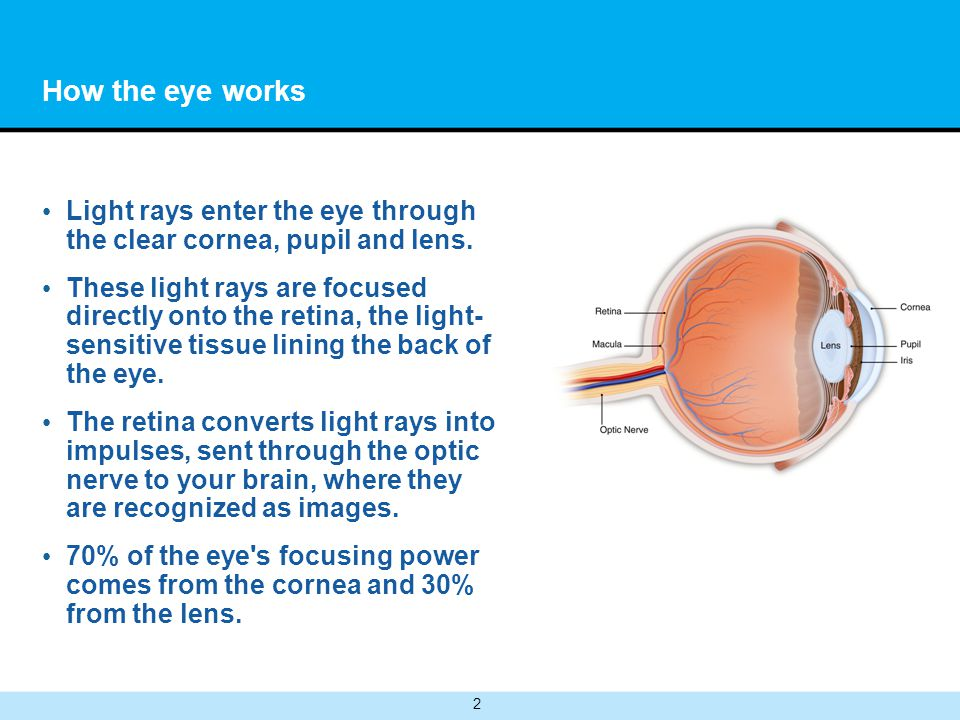 2 How the eye works Light rays enter the eye through the clear cornea, pupil and lens. These light rays are focused directly onto the retina, the ligh