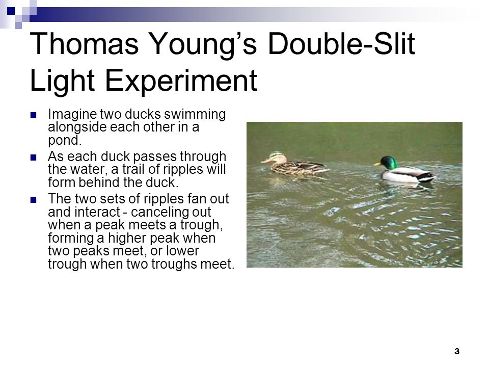 3 Thomas Youngs Double-Slit Light Experiment Imagine two ducks swimming alongside each other in a pond.