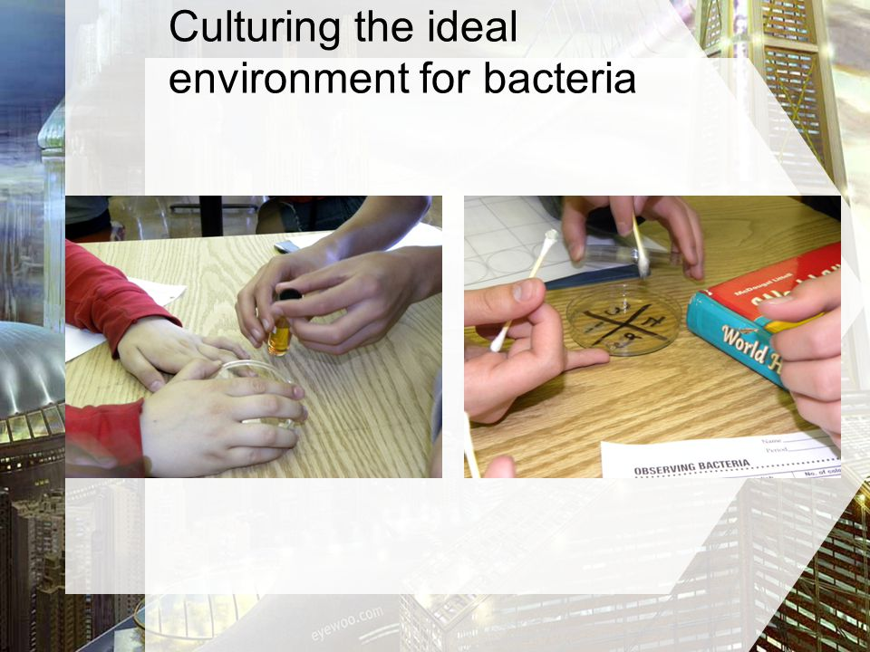 Culturing the ideal environment for bacteria