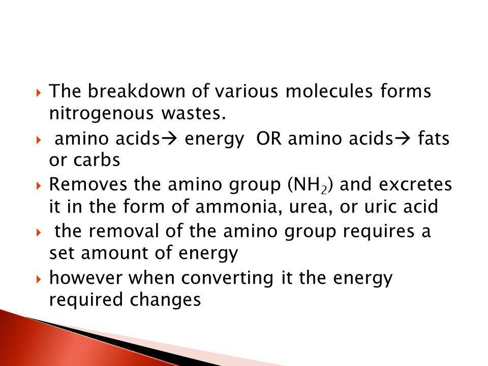 The breakdown of various molecules forms nitrogenous wastes. amino acids energy OR amino acids fats or carbs Removes the amino group (NH 2 ) and excre
