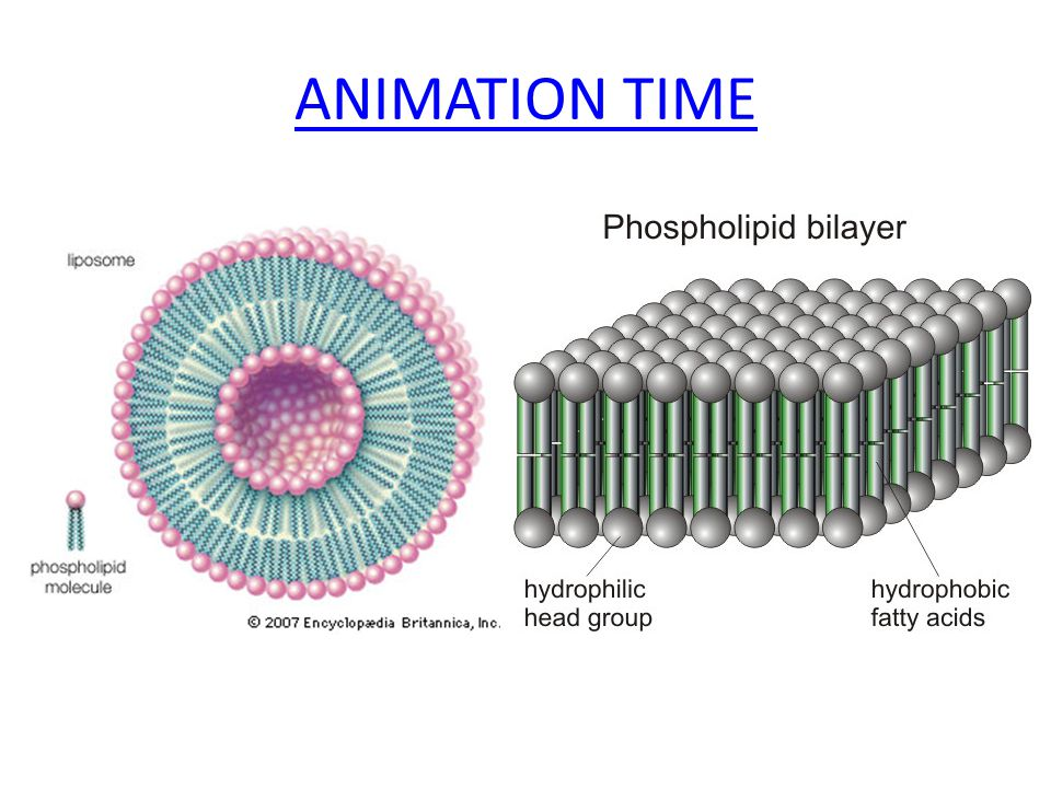 ANIMATION TIME