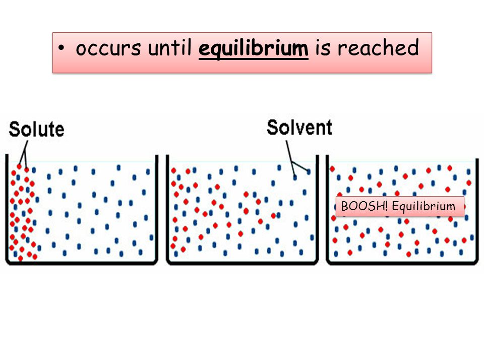 occurs until equilibrium is reached BOOSH! Equilibrium