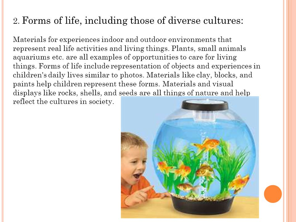 2. Forms of life, including those of diverse cultures: Materials for experiences indoor and outdoor environments that represent real life activities a