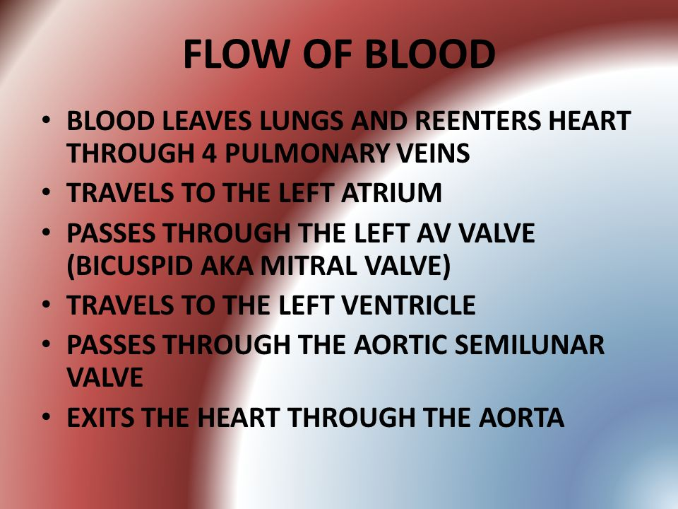 FLOW OF BLOOD BLOOD LEAVES LUNGS AND REENTERS HEART THROUGH 4 PULMONARY VEINS TRAVELS TO THE LEFT ATRIUM PASSES THROUGH THE LEFT AV VALVE (BICUSPID AK