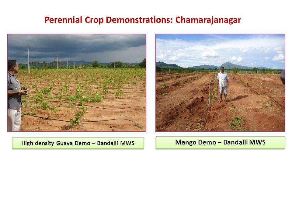 High density Guava Demo – Bandalli MWS Mango Demo – Bandalli MWS Perennial Crop Demonstrations: Chamarajanagar