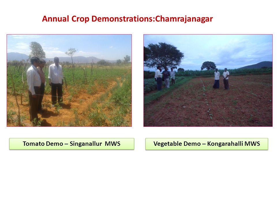 Tomato Demo – Singanallur MWS Vegetable Demo – Kongarahalli MWS Annual Crop Demonstrations:Chamrajanagar