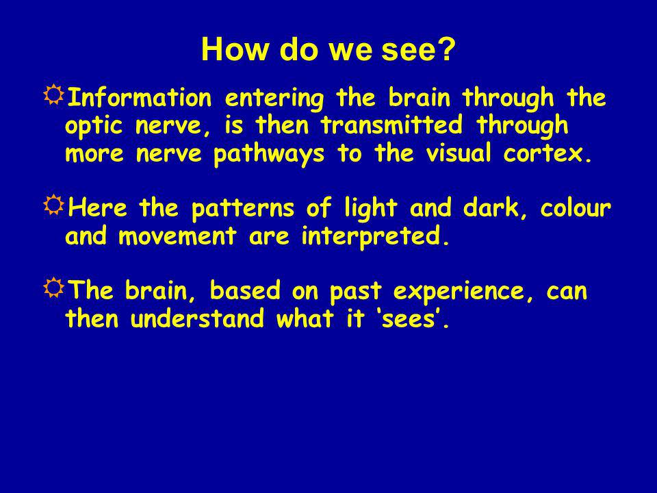 How do we see? Information entering the brain through the optic nerve, is then transmitted through more nerve pathways to the visual cortex. Here the