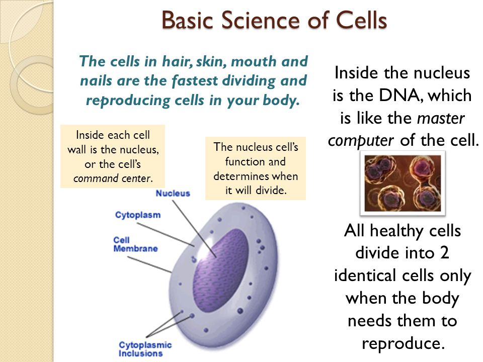 Basic Science of Cells Inside the nucleus is the DNA, which is like the master computer of the cell.