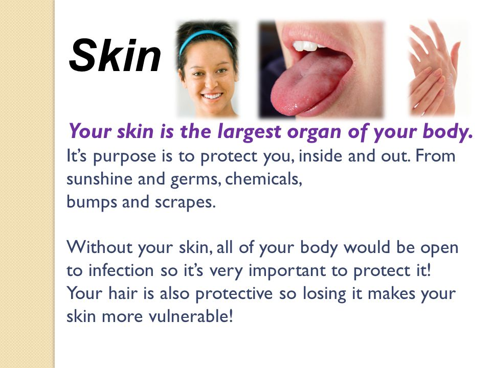 Skin Your skin is the largest organ of your body. Its purpose is to protect you, inside and out.