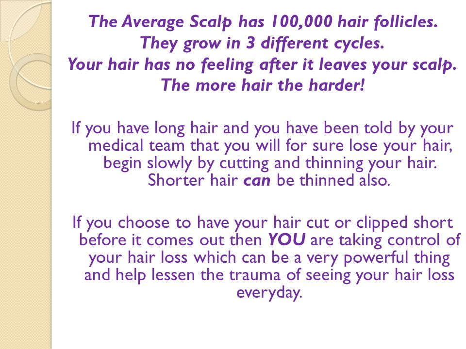 The Average Scalp has 100,000 hair follicles. They grow in 3 different cycles. Your hair has no feeling after it leaves your scalp. The more hair the