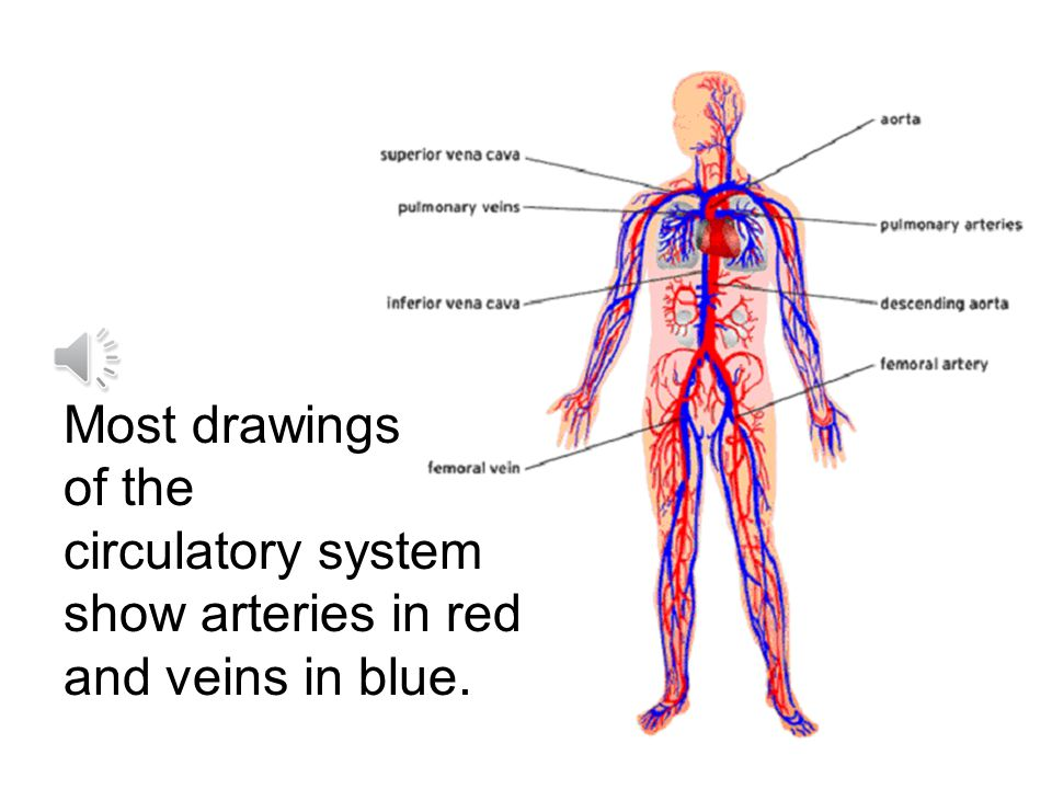 Veins carry blood back to the heart from all parts of the body.