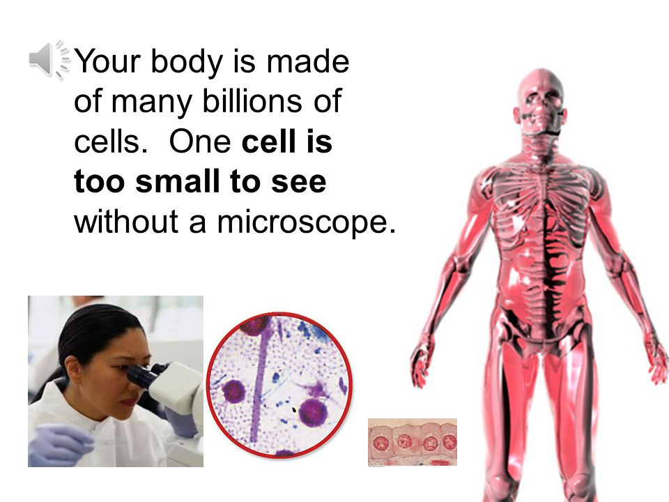 / Every living thing is made up of tiny living parts called cells.