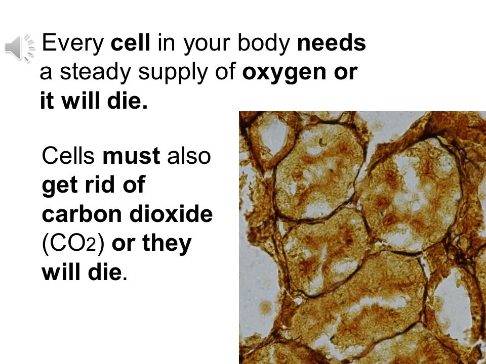 / / Your body is made of many billions of cells. One cell is too small to see without a microscope.