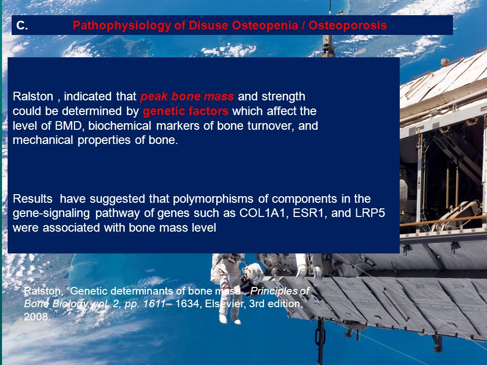 C. Pathophysiology of Disuse Osteopenia / Osteoporosis Ralston, indicated that peak bone mass and strength could be determined by genetic factors whic