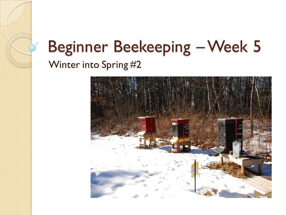 Beginner Beekeeping – Week 5 Winter into Spring #2